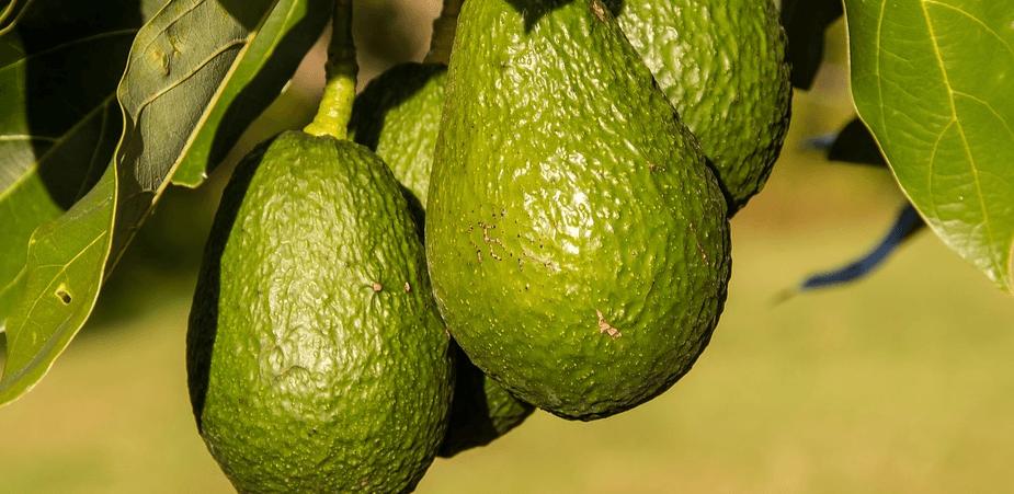 De kracht van avocado