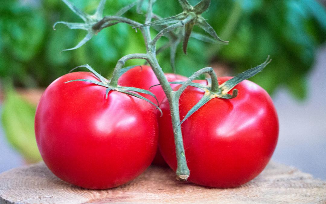 Hoe tomaten je immuunsysteem kunnen helpen verbeteren